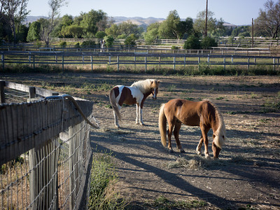 Horses, Buellton CA