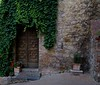 An ivy covered residence wall in San Gimignano, Italy.