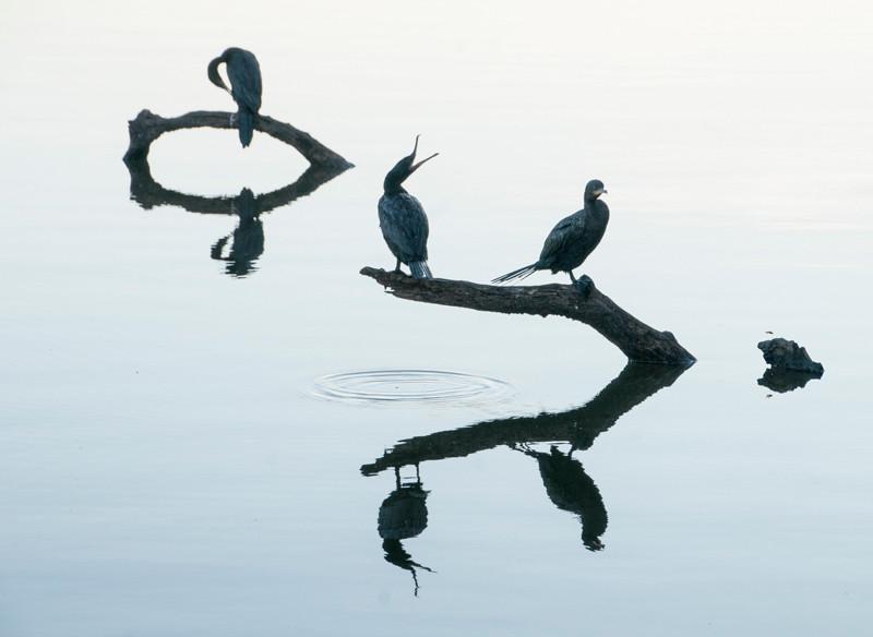 Amazon_Birds31