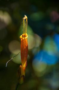 Amazon_Flora24