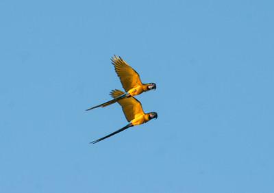 Amazon_Birds40