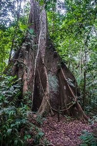 Amazon_Trees07