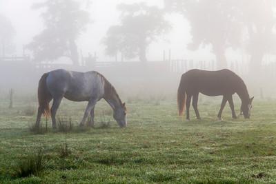 Ombu_Horses-9