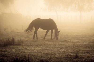 Ombu_Horses-2