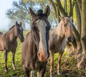 Ombu_Horses-5