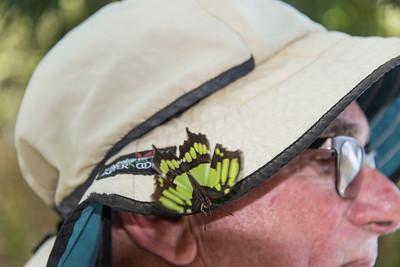 Iguazu_Butterflies-5