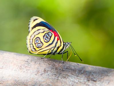Iguazu_Butterflies-2