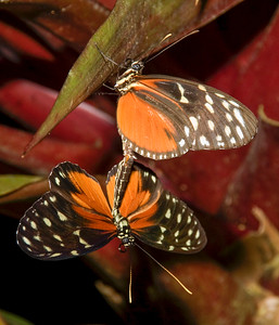 Costa Rica_Butterflies-1