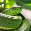 Costa Rica_Reptiles-5