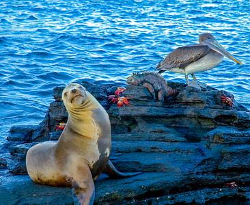 Galapagos_Sea Lions-13