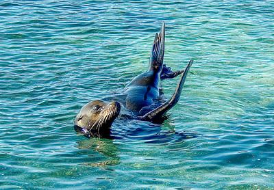 Galapagos_Sea Lions-5