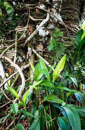 Struggling Flower- Costa Rica