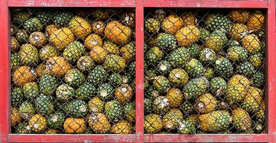 Pineapple Purgatory- Costa Rica
