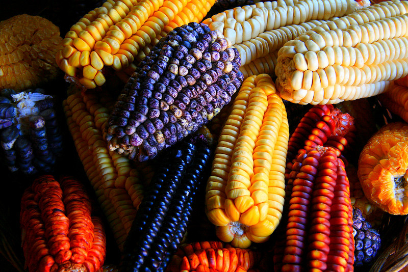 A Sample of Corn - Peru
