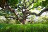 Twisted Tree- Costa Rica