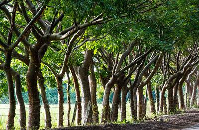 Living Fence- Costa RIca