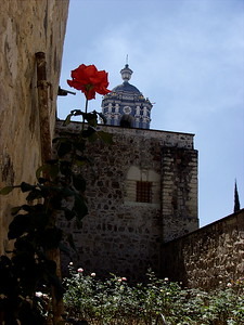 Church & Flower- Oaxaca, Mexico