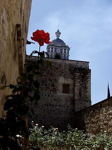 Church & Flower- Oaxaca, Mexico