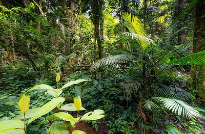 Jungle Chaos- Costa Rica
