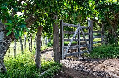 Ranch Gate- Costa Rica