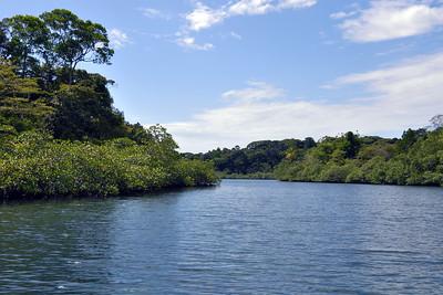 Isla Bastimentos - Mangrove Waterline 2