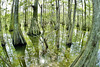 Thick in the Swamp