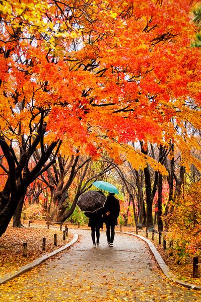 Changgyeonggung Autumn 2015