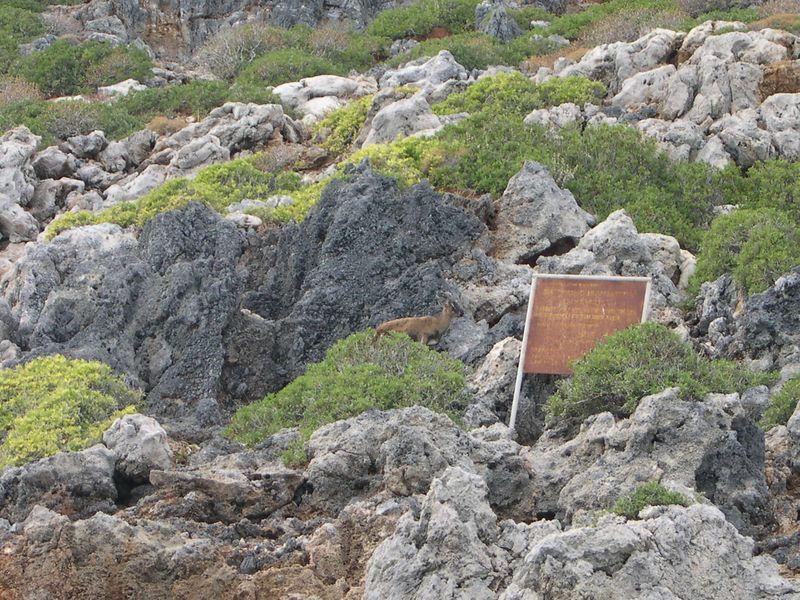 A kri-kri near a nature preserve sign.