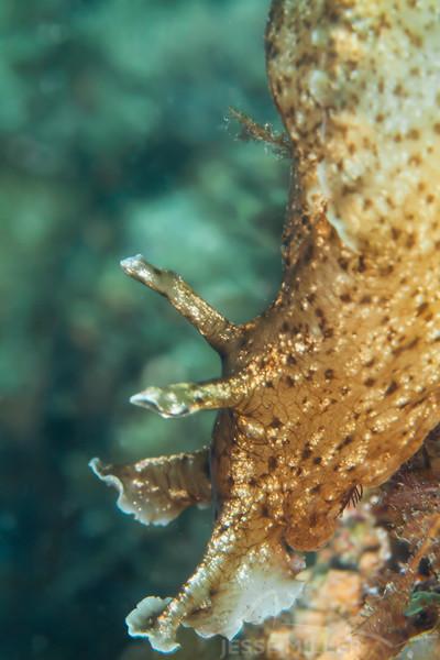 California Sea Hare - Dive 1 - Five Stone Grotto