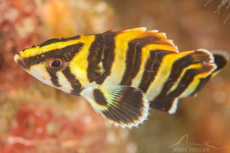 Treefish - Dive 3 - Fry's Harbor