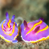 Macfarland's Slug - Dive 2 - Five Stone Grotto
