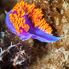 Spanish Shawl - Dive 1 - Five Stone Grotto