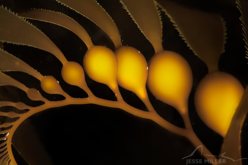 Seaweed - Dive 7 - Cathedral Cove