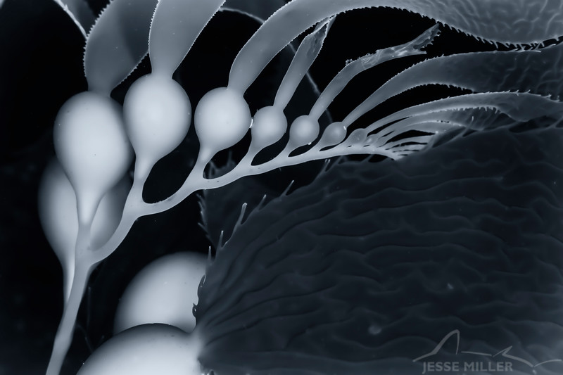 Seaweed - Dive 6 - Cathedral Cove