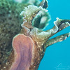 California Sea Hare - Dive 1 - Five Stone Grotto
