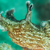 California Sea Hare - Dive 2 - Five Stone Grotto