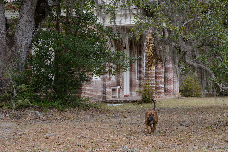 Afterwards we stopped by St. James Santee Parish Church (late 18th century).  The dog was much friendlier than she looks.