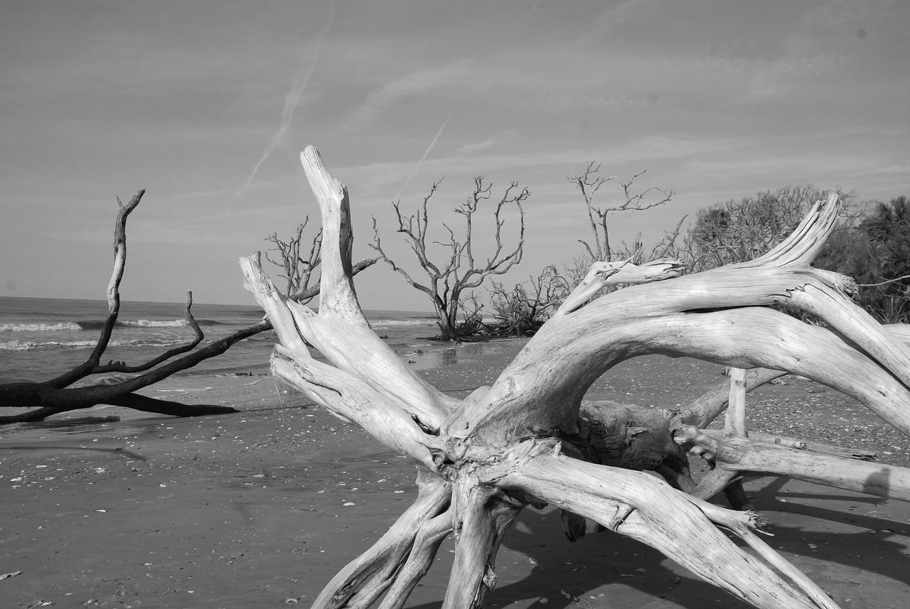 Botany Bay Boneyard Edisto Island, SC