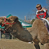 Camel Ride at Charleston Wildlife Festival