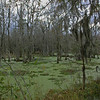 Magnolia Plantation Swamp