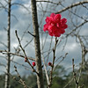 Early Flower at Magnolia Plantation
