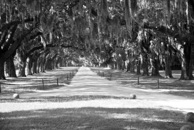 Charleston-33