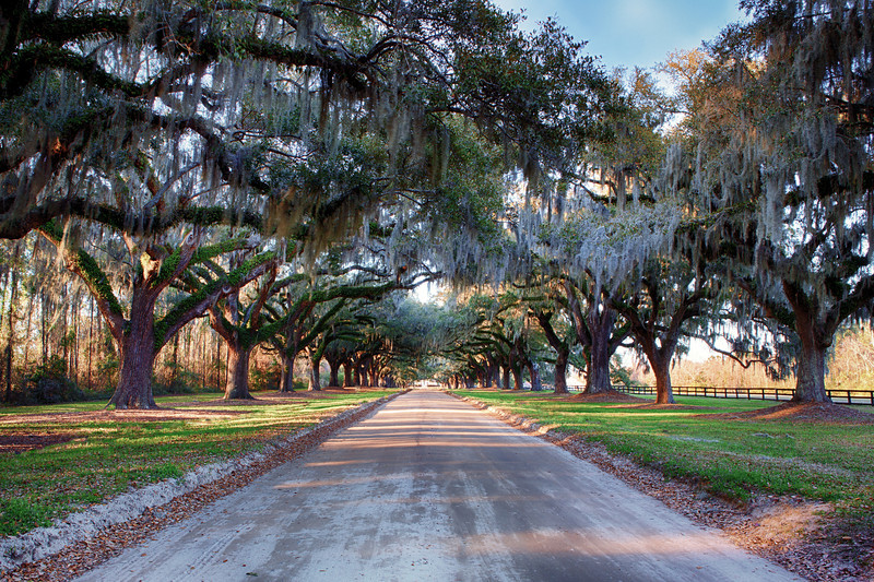 Boone Hall Plantation Entrance