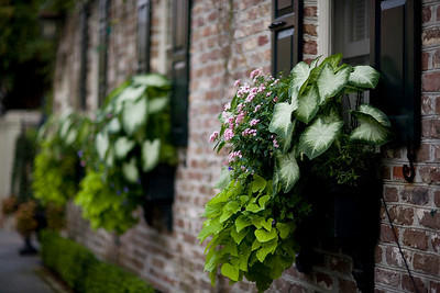 Window boxes are often the only space available for gardens.