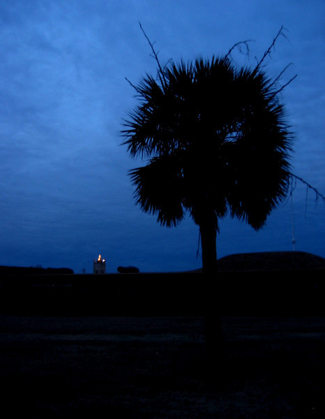 Sabal or Cabbage Palmetto (Inodes Palmetto, SC State Tree) in silhouette, Ft Moultrin