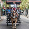 More tourists on carriage ride