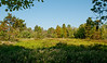 Audubon Swamp Gardens at Magnolia Plantation and Gardens - View into the swamp