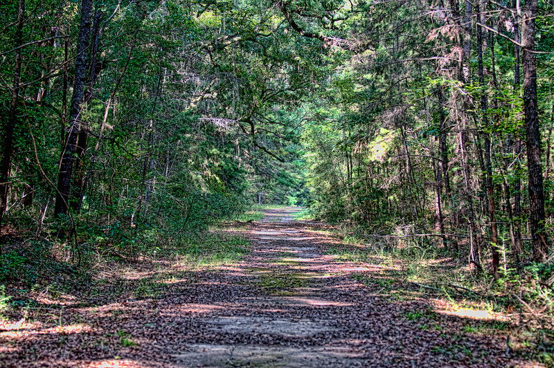 Caw Caw Interpretive Center - Swamp Sanctuary Trail