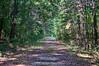 Caw Caw Interpretive Center - Swamp Sanctuary Trail