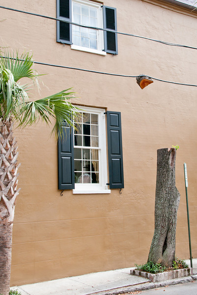 The town of Charleston must have been trimming this tree but somehow part of it remained attached to this telephone wire.